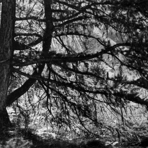 The Eden of Denis Brihat