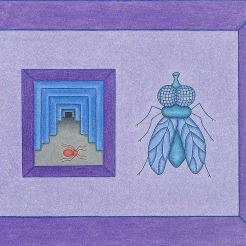 a colored-pencil drawing by self-taught artist David Zeldis of a fly and small, receding interior