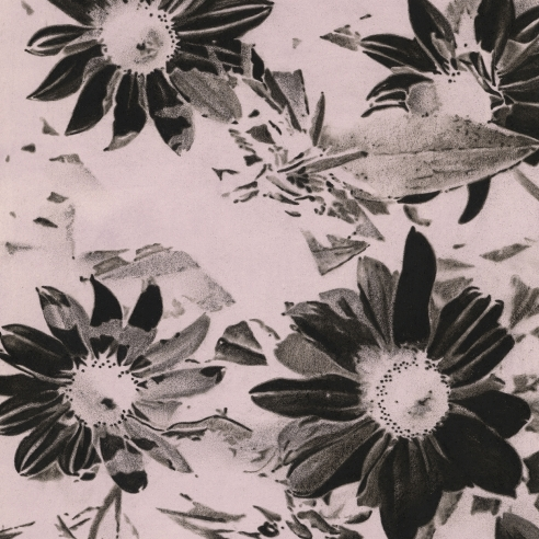 a drawing by Andy Mister of black petalled flowers on an off-white background, like a photographic negative
