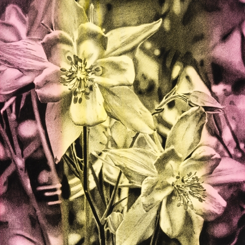 a tightly-rendered graphite drawing of flowers on a bright pink and yellow striped background