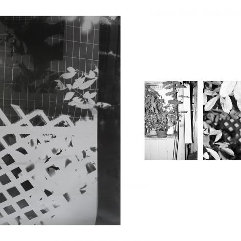 Bryan Graf: Shot/Reverse Shot, Gardening at Night, July 26, 2020, Photogram and two pigment prints, ditych