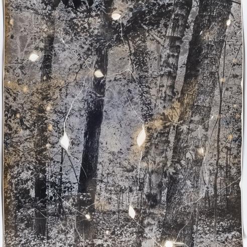 Gesche Würfel: When Trees are Dying