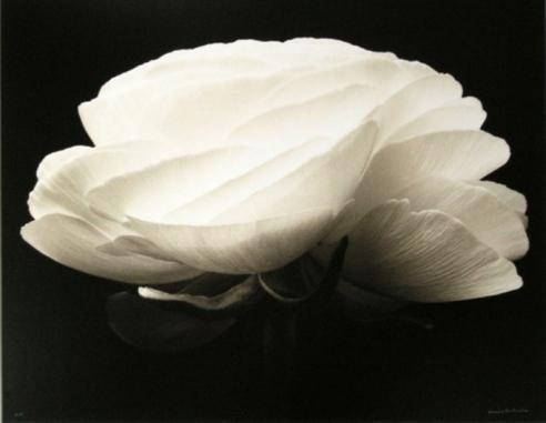 Denis Brihat: Photographs 1964-2006