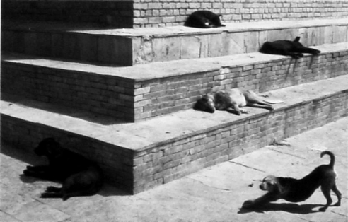 Pentti Sammallahti: Selected Photographs