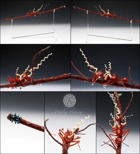Leaf Cutter Ant with Cordyceps