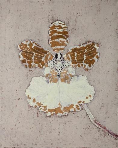 Oncidium Purpurea