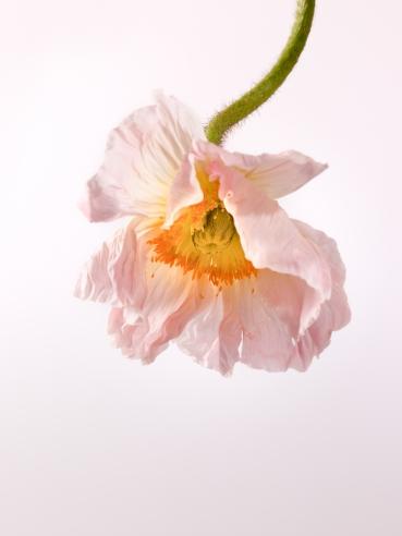 Flowers No 6