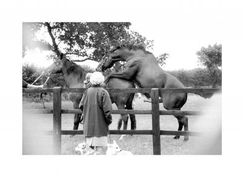 The Queen watching her horses mate