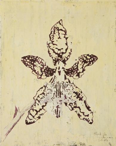 Odont de Burghgraeve Orchis