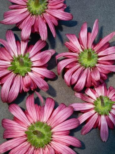 Flowers No 5