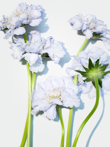 Flowers No 2