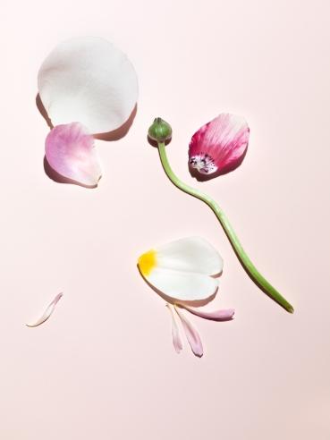 Flowers No 1
