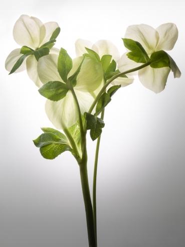 Flowers No 7