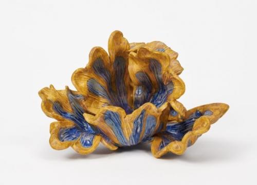 Solomon tulip