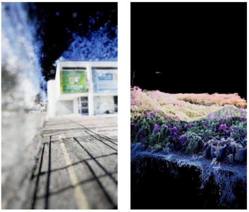 """David Hartt """"A Colored Garden"""""""