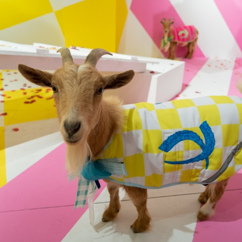 In Jonathan Paul's New Exhibition, Two Goats Compete in An Absurdist Game About Human Nature