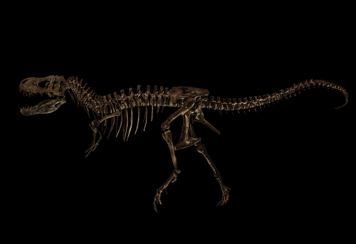 Natural History Dinosaur Among Fossils Photographed in New Exhibition