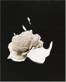 Jay DeFeo Retrospective at the Whitney