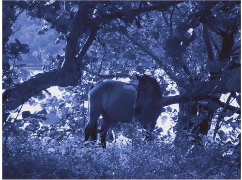 P5 1447 (matt/blue), ©2005