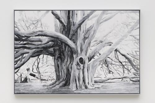 """Elegy (Graveyard Yew),"" 2019"