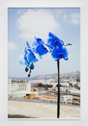 "Barak Zemer, ""Orchids (Sapphire Gemstone),"" 2016"