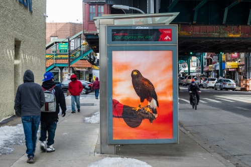 """""""Arrival,"""" 2020, Roosevelt Ave. between 69th St. & 68th St., Queens, as a part of Awol Erizku: New Visions for Iris, an exhibition on 350 JCDecaux bus shelter displays across New York City and Chicago. Photo: Nicholas Knight, Courtesy of Public Art Fund, NY."""