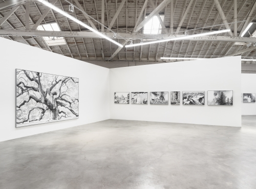 Cynthia Daignault, Elegy, installation view at Night Gallery, 2019.