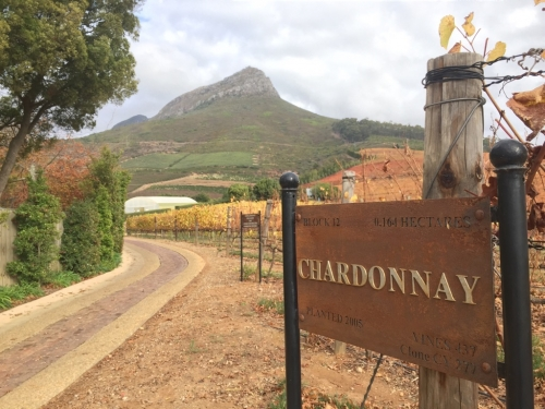 Africa's Wine Country