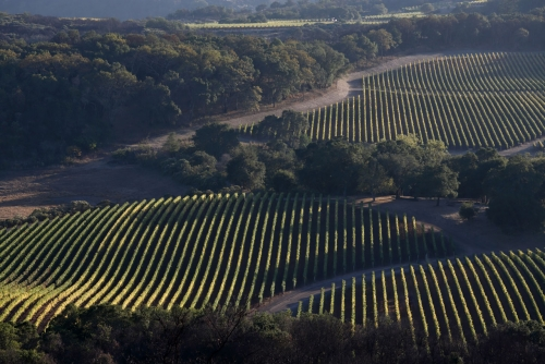 Aerial vineyard view of the estate