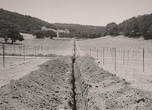 vineyard groundbreaking on Kenzo Estate