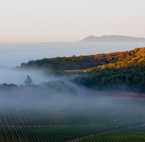 fog fills the valleys