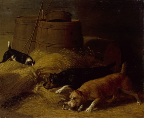 Rats amongst the Barley Sheaves, 1851