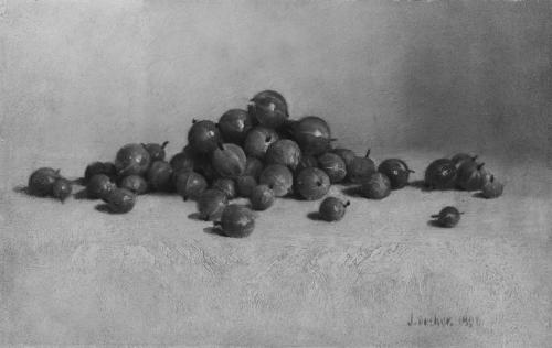 Gooseberries, 1896