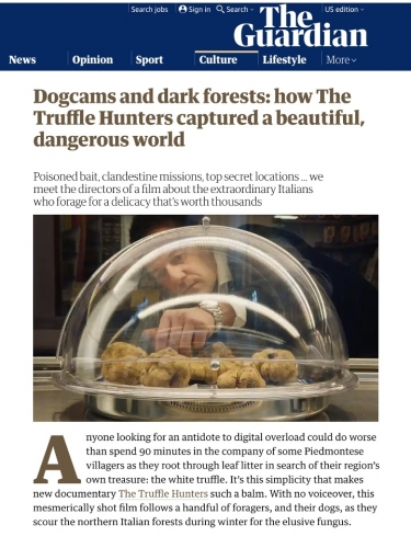 Dogcams and dark forests: how The Truffle Hunters captured a beautiful, dangerous world