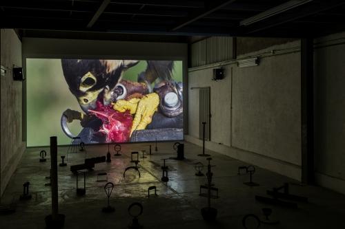 notable solo exhibitions