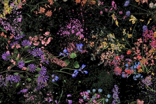 Jennifer Steinkamp: Botanic