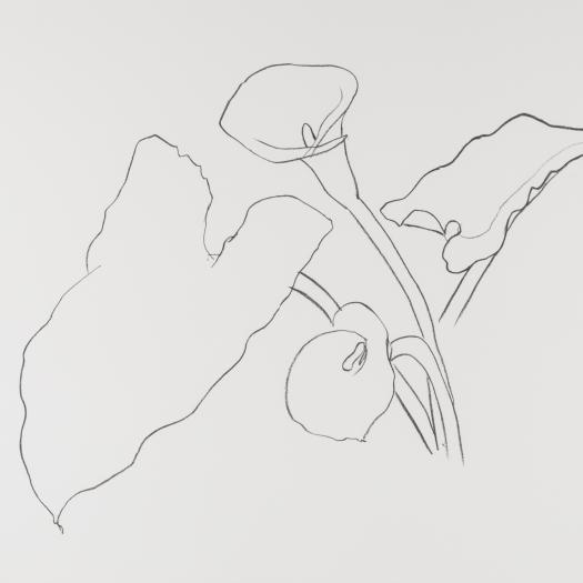 Ellsworth Kelly | Botanicals and Curves