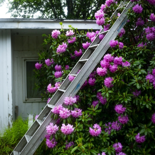 Cig Harvey: In the Window