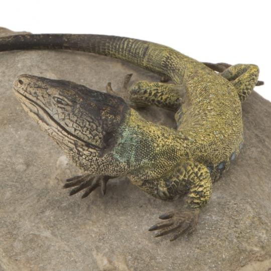 European Lizard