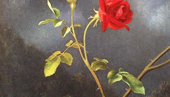 American Beauty:  The Rose in American Art, 1800-1920