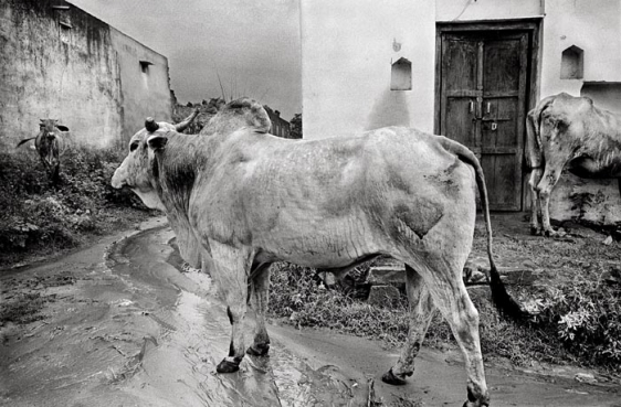 Raghu Rai STILLED BY THE RAIN, GURGAON 2000 Digital scan of photographic negative on archival paper 20 x 30 in.