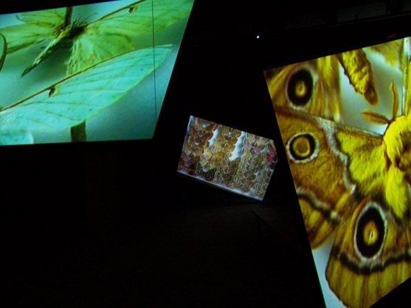 Kutlug Ataman, Stefan's Room, 2004, Five screen video installation with variable dimension