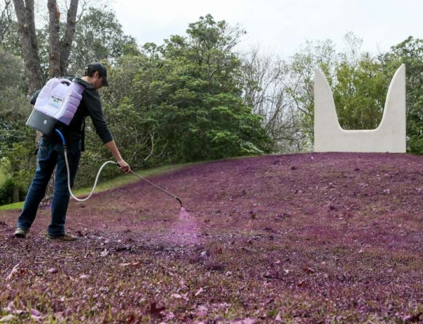 It's a paint in the grass to keep McNay Art Museum installation looking good