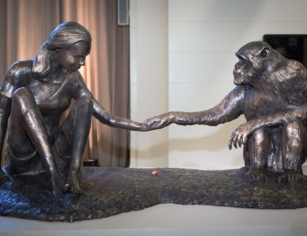 Dr. Jane Goodall Unveils Life-Sized Bronze Sculpture 'The Red Palm Nut' by Artist Marla Friedman Depicting Goodall and Chimpanzee David Greybeard