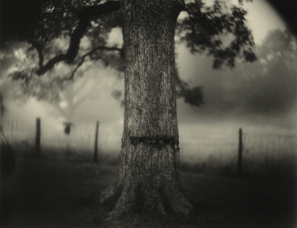 Sally Mann in The Washington Post