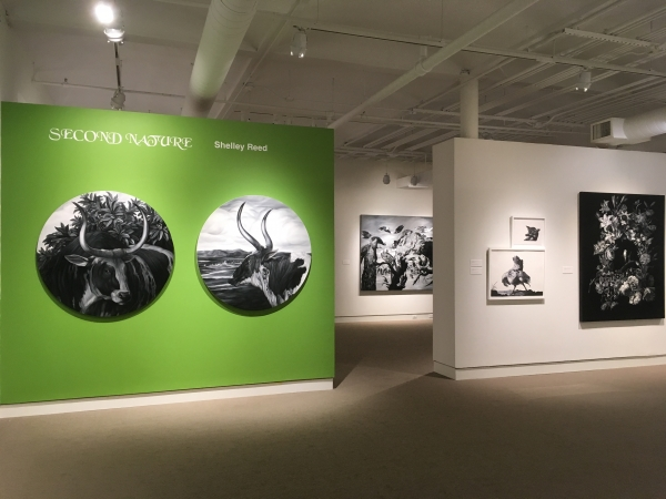 Shelley Reed at the University of Maine Museum of Art