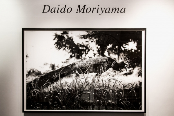 Exhibition: Daido Moriyama at Michael Hoppen Gallery