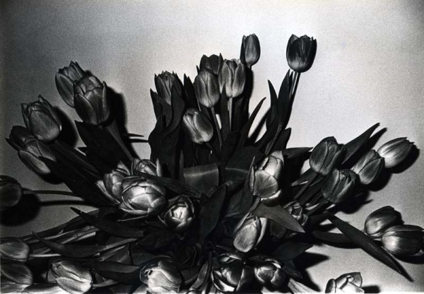 "Exhibition: Daido Moriyama on view in ""Daido Tokyo"" at the Fondation Cartier pour l'art contemporain in Paris"
