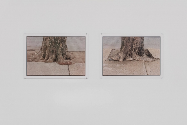 """Zoe Leonard: The ties that bind"" at Hauser & Wirth (online exhibition)"