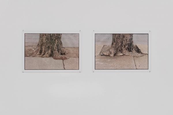"""Zoe Leonard: The ties that bind"" at Hauser & Wirth (online exhibition)"